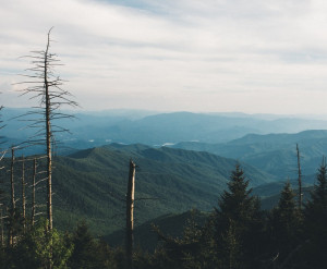 Appalachian skyline, mountain view out over dead hemlocks