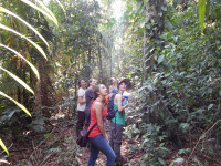 Five women researchers stand surrounded by thick jungle vegetation watching another member climb into the treetops
